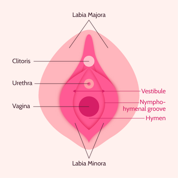 hymen anatomy