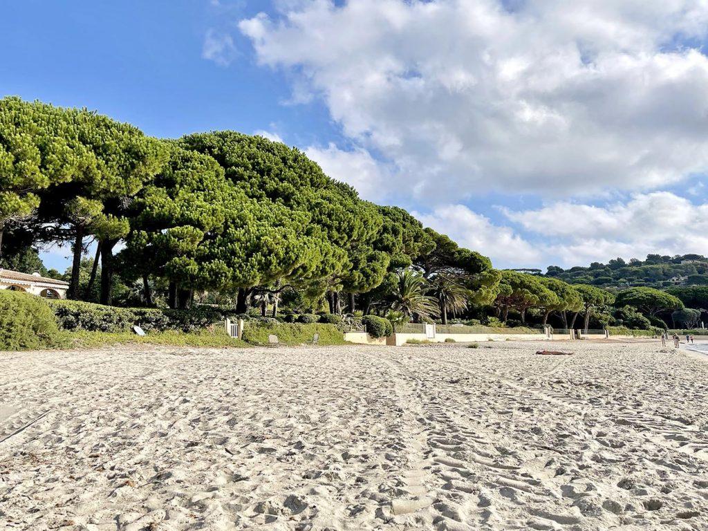 vegetazione spiaggia Pampelonne Saint-Tropez